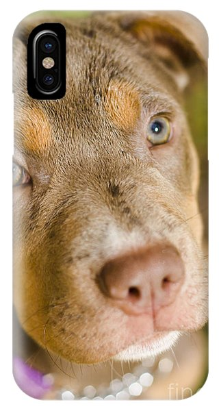 Dog Obedience Training IPhone Case