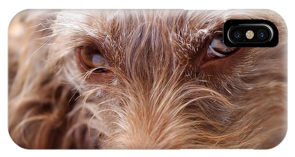 Dog Stare IPhone Case