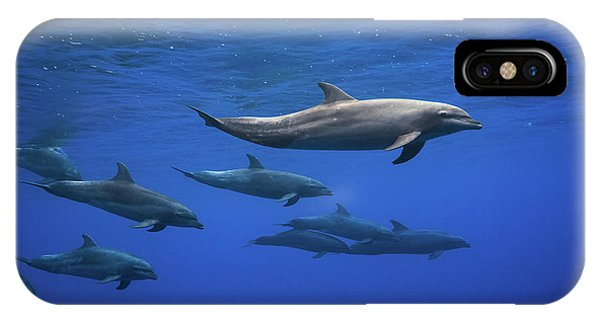 Dolphin iPhone Case - Dolphins by Barathieu Gabriel