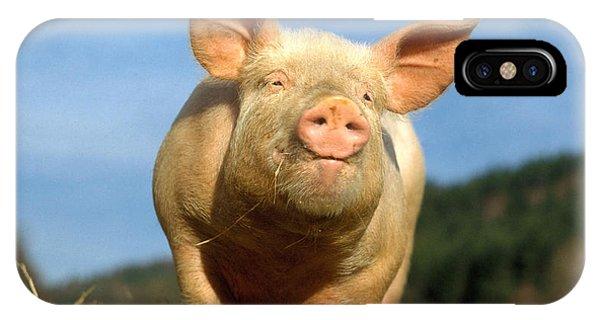 Barnyard Animals iPhone Case - Domestic Pig by Hans Reinhard