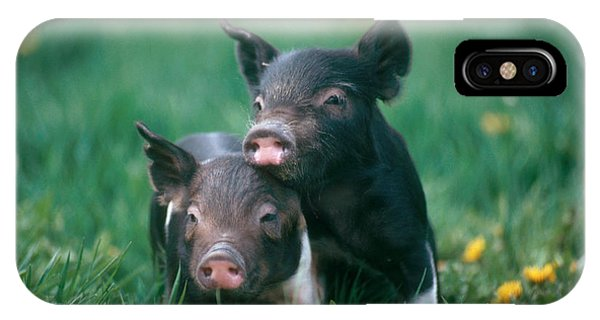 Domestic Piglets IPhone Case