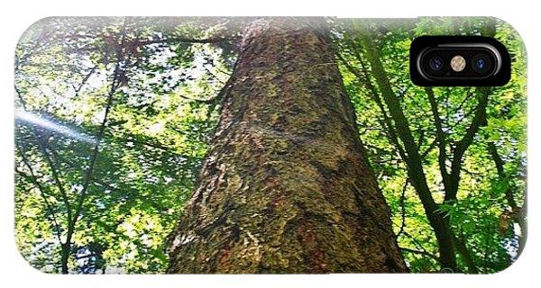 Sunny iPhone Case - Douglas Fir Tree Rising by Anna Porter