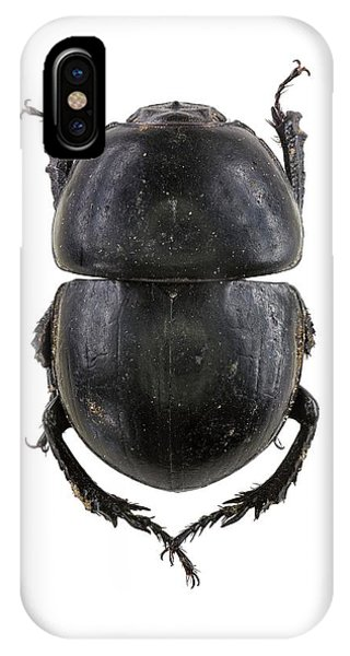 Earth-boring Dung Beetle IPhone Case