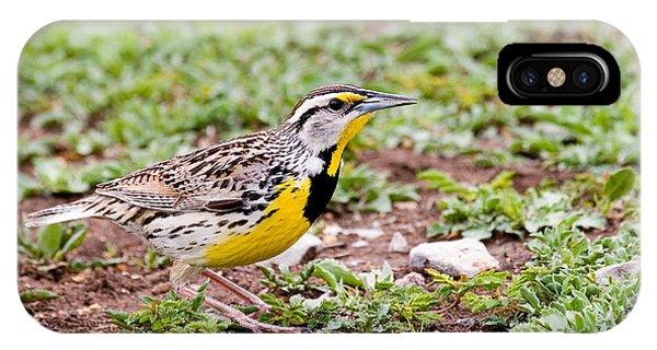 Eastern Meadowlark Sturnella Magna IPhone Case