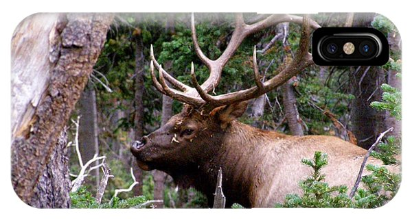 Elk With A Nice Rack IPhone Case