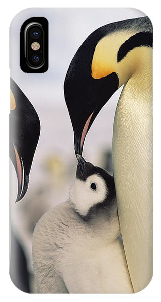 Emperor Penguin Parents With Chick IPhone Case