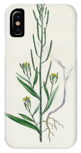 Mustard iPhone Case - Erysimum Cheiranthoides Treacle Hedge-mustard by English School