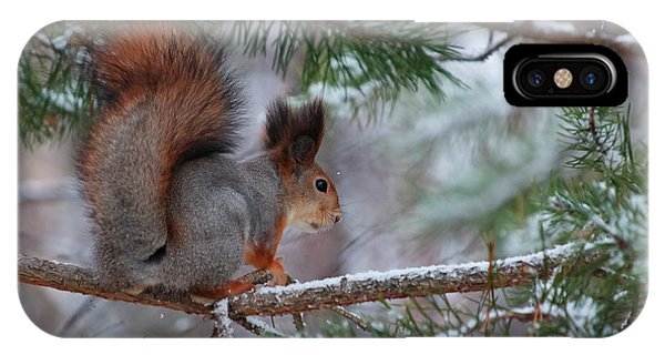 Eurasian Red Squirrel IPhone Case