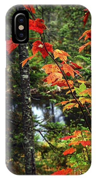 Creek iPhone Case - Fall Forest And River by Elena Elisseeva