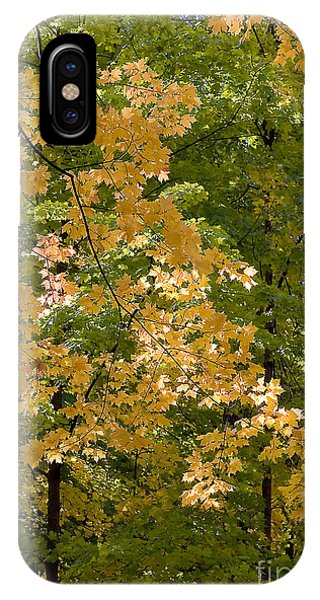 Fall Maples IPhone Case