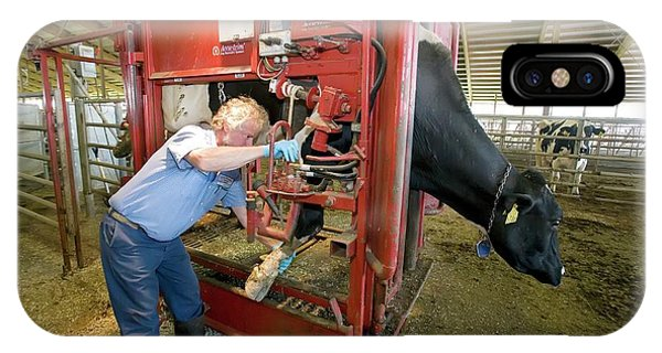 Farmer Checking A Cow's Hoof Phone Case by Jim West
