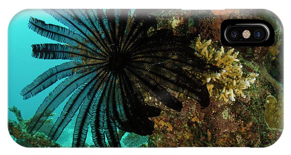 Feather Star (comasteridae Phone Case by Pete Oxford