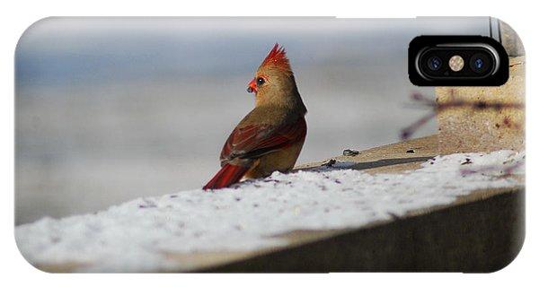 Female Cardinal In Winter IPhone Case