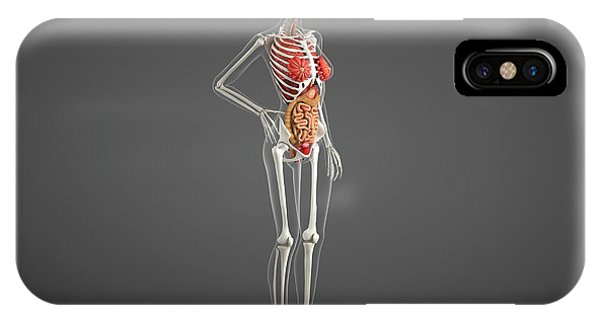 Female Internal Organs Phone Case by Roger Harris/science Photo Library