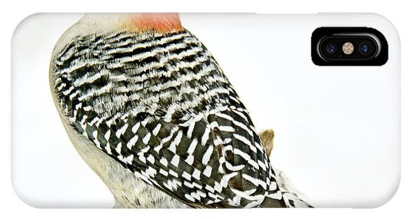 Female Redbellied Woodpecker In Winter Animal Portrait IPhone Case
