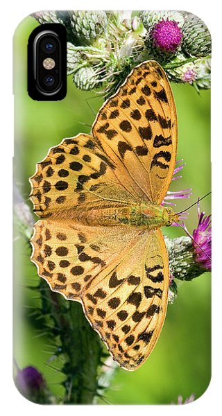 Female Silver-washed Fritillary Phone Case by John Devries/science Photo Library