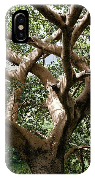 East Africa iPhone Case - Fig Tree Near The Escarpment by Martin Zwick