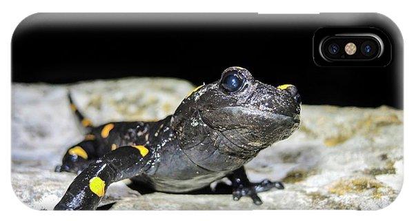 Fire Salamander (salamandra Salamandra) IPhone Case