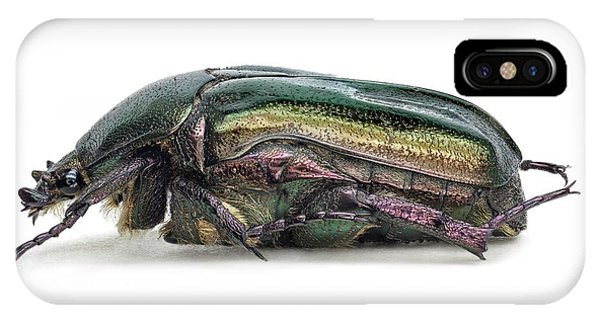 Coleoptera iPhone Case - Flower Chafer by F. Martinez Clavel