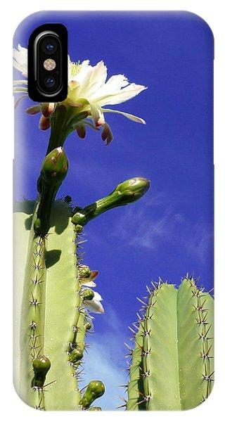 Flowering Cactus 2 IPhone Case