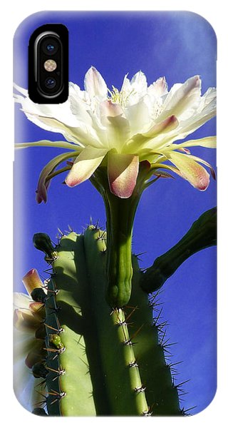 Flowering Cactus 3 IPhone Case