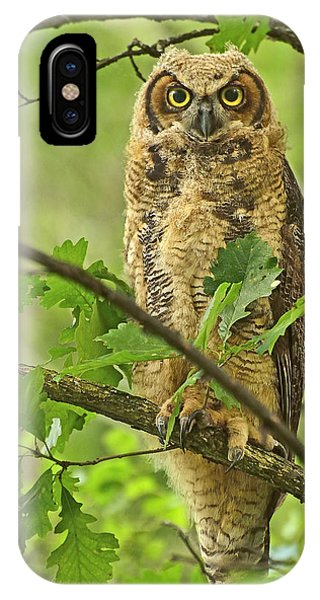 Forest King IPhone Case