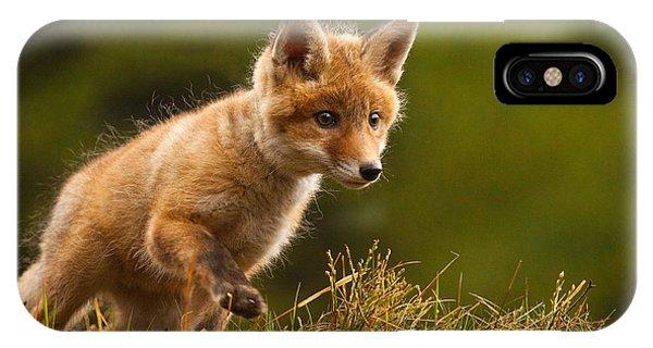 Young iPhone Case - Fox by Robert Adamec