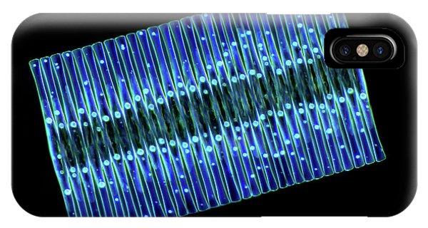 Diatoms iPhone Case - Fragilaria Diatoms by Marek Mis