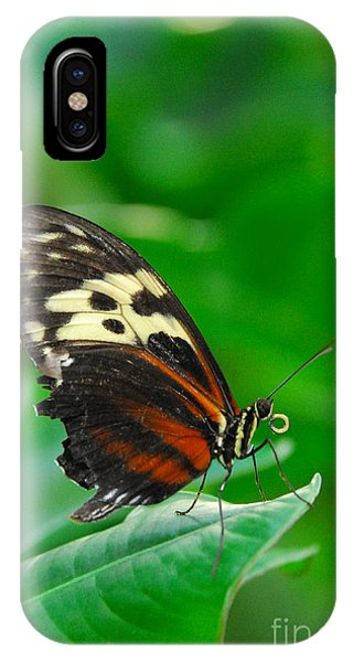D5l15 Butterfly At Franklin Park Conservatory IPhone Case