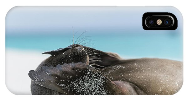 Galapagos Sea Lion Pup Covering Face IPhone Case