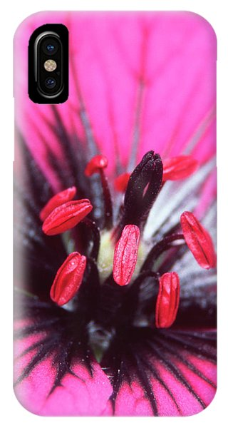 Stamen iPhone Case - Geranium Flower by Dr Jeremy Burgess/science Photo Library