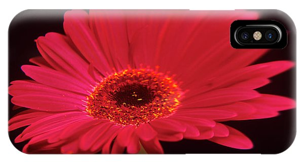 Gerbera Flower Phone Case by Mark Thomas/science Photo Library