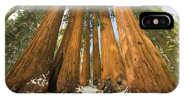 Mp iPhone Case - Giant Sequoias Sequoia N P by Yva Momatiuk John Eastcott