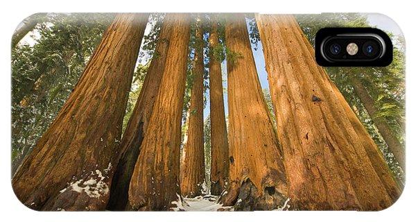 Giant Sequoias Sequoia N P IPhone Case