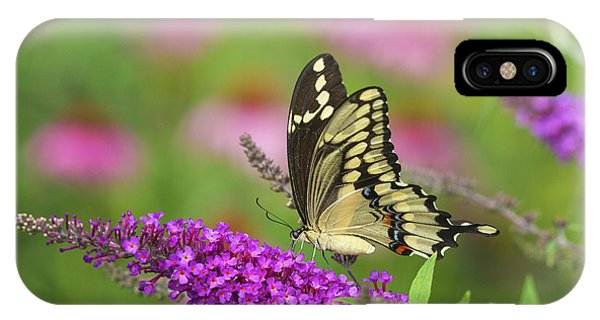Pollination iPhone Case - Giant Swallowtail Butterfly Papilio by Panoramic Images