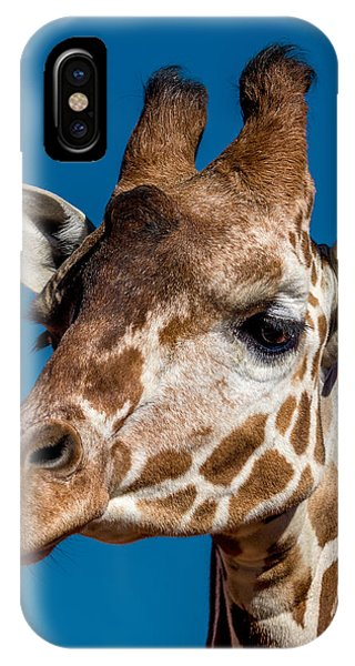 Giraffe iPhone Case - Giraffe by Ernie Echols