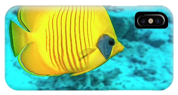 Ichthyology iPhone Case - Golden Butterflyfish Over A Reef by Georgette Douwma