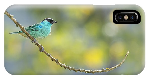 Golden-naped Tanager IPhone Case