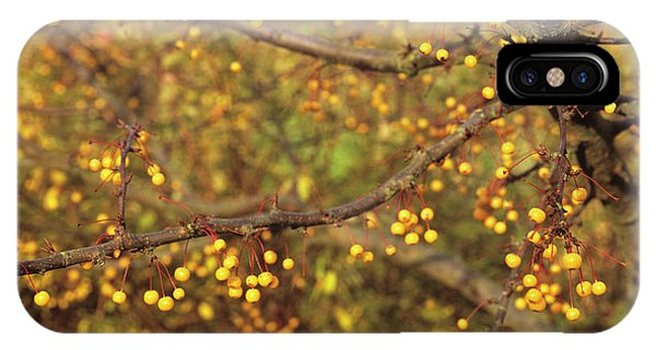 Golden Gardens iPhone Case - Golden Raindrops Tree Fruit by Anthony Cooper/science Photo Library