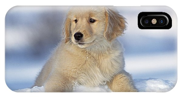 Golden Retriever Puppy Dog IPhone Case