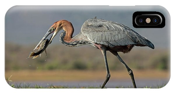 East Africa iPhone Case - Goliath Heron With Fish by Tony Camacho
