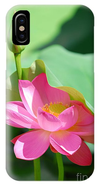 D48l-96 Water Lily At Goodale Park Photo IPhone Case