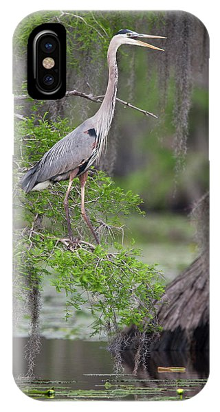 Bald Cypress iPhone Case - Great Blue Heron (ardea Herodias by Larry Ditto
