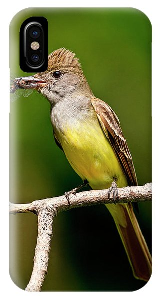 Great Crested Flycatcher Myiarchus IPhone Case