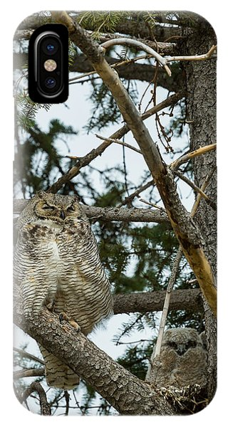 Great Horned Owls IPhone Case