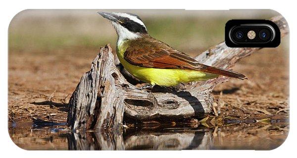 Flycatcher iPhone Case - Great Kiskadee (pitangus Sulphuratus by Larry Ditto