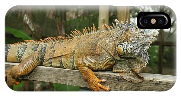 Maya iPhone Case - Green Iguana (iguana Iguana by William Sutton