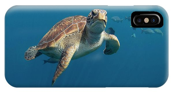 iPhone Case - Green Turtle Swimming by Peter Scoones/science Photo Library