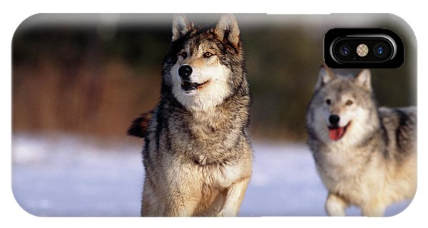 Grey Wolves In Snow Phone Case by William Ervin/science Photo Library