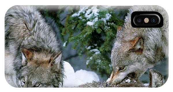 Grey Wolves With A Kill Phone Case by William Ervin/science Photo Library